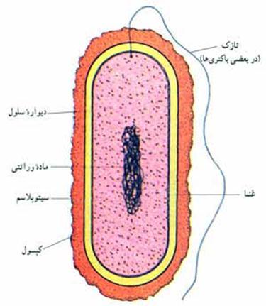 اپیدرمی و اکولوژی ویروس ها