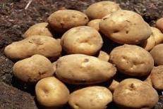 بررسی تعیین ضریب گیاهی و پهنه بندی نیاز آبی سیب زمینی